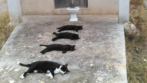 Mata a cuatro gatos para hacer una foto artística