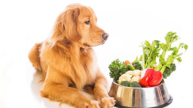 Los veterinarios advierten que canes y gatos son carnívoros