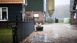 Orden de recluir a las aves de granjas británicas por la gripe aviar