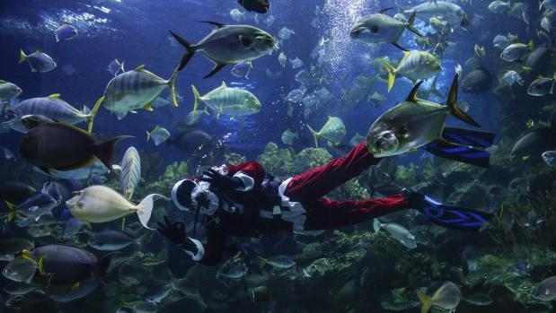 A menor calentamiento, más peces en los océanos