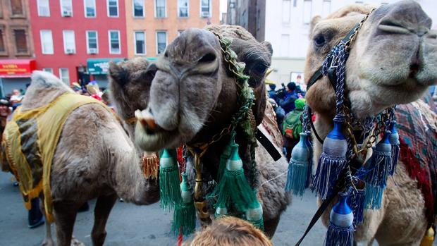 Cabalgata de Reyes Magos en el neoyorquino barrio de Harlem