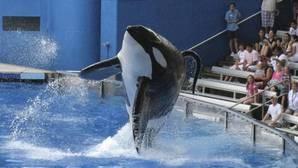 Imagen de archivo de tTlikum durante un espectáculo en SeaWorld
