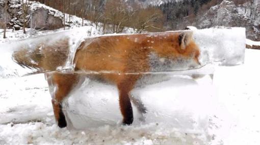 Imagen del zorro congelado al caminar por la superficie helada de las aguas del Danubio