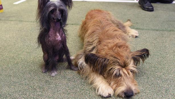 erección de esterilizador para perros