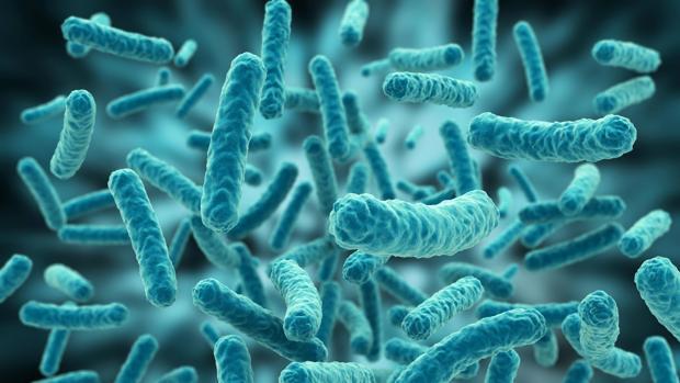 Las 12 bacterias que resisten a los fármacos