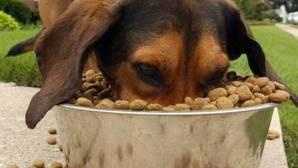 Los atracones de comida también pueden originar problemas digestivos en las mascotas