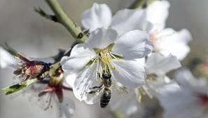 ¿Cómo será la primavera que ha entrado a las 11.29 horas de este 20 de marzo?