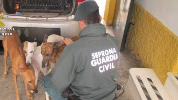 7936f6d75 Seis meses de cárcel por cortar rabos y orejas de diez perros sin sedarlos
