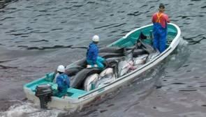 «Guerra» en las eólicas entre delfines y pescadores: «O ellos o nosotros»
