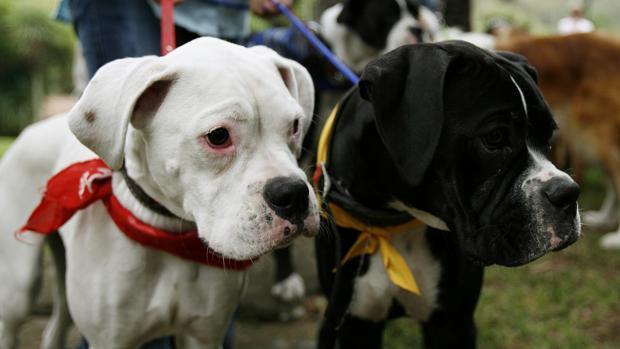 Fotografía de archivo de dos perros en un parque