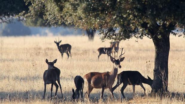 La mayoría de las garrapatas capturadas para el estudio se encontraron en ciervos