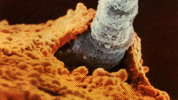 Momento en el que un espermatozoide fecunda un óvulo