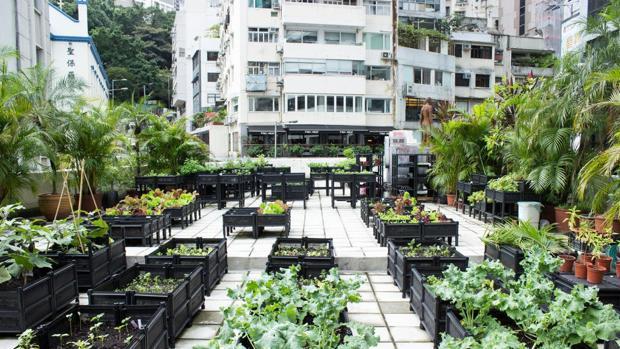 Hasta 19 huertos como este se extienden por las terrazas y azoteas algunos de los altos bloques que pueblan Hong Kong