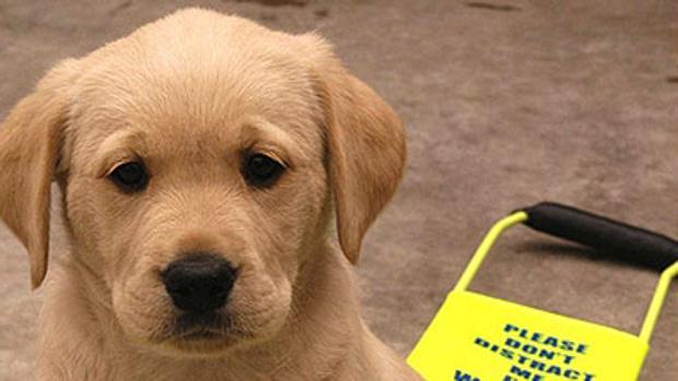Los perros-guía cumplen una función esencial para la sociedad