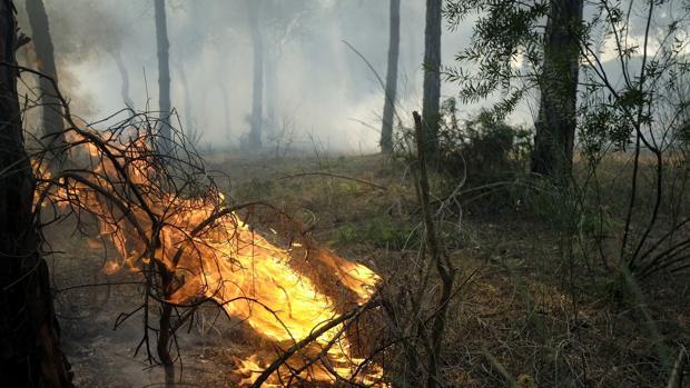 Llamas en los alrededores de Mazagón, en Huelva, en el incendio declarado en el término municipal de Moguer