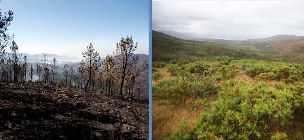 El monte Pindo, tras ser pasto de las llamas en 2006 (izq.), y en la actualidad