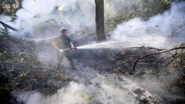 Declarado un incendio forestal en Málaga