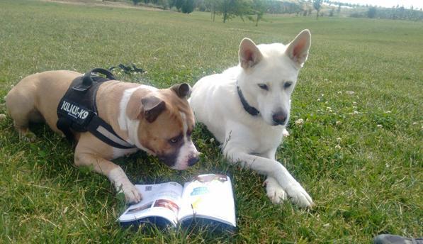 Dos perros en los alrededores del IFEMA