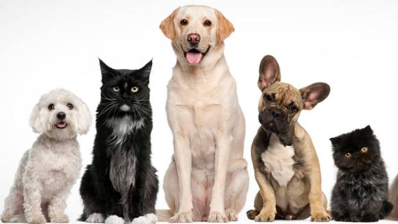 Calvicie en perros y gatos