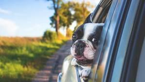 Con la llegada de las vacaciones son muchas las familias con perro que no quieren separarse de ellos