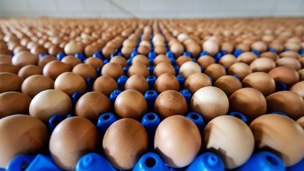 huevos contaminados kihH  620x349@abc - Holanda detuvo sospechosos por huevos contaminados