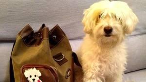 España, el cuarto país del mundo con más alojamientos «pet-friendly»