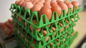Inmovilizan 20.000 huevos contaminados en País Vasco