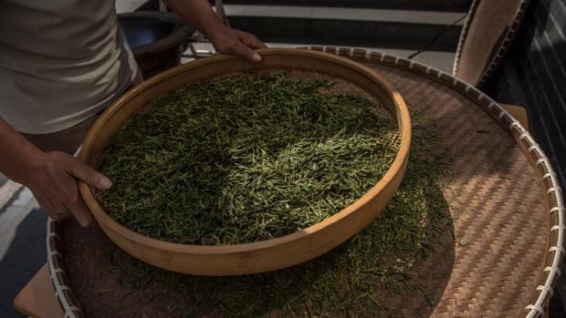 El galato de epigalocatequina, presente en el té verde, podría ayudar en el tratamiento del TEAF