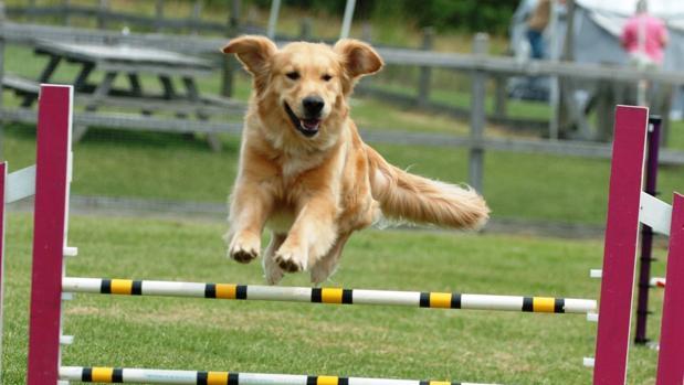 Parques para perros, algo más que el paseo diario