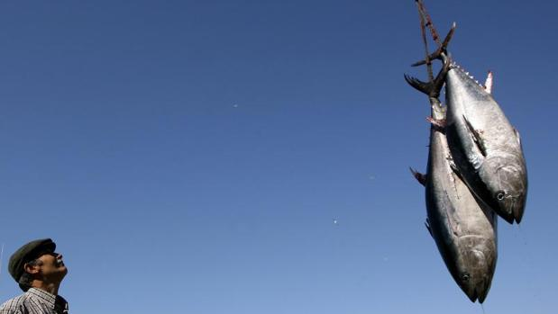 Sanidad confirma 154 intoxicados por atún español adulterado en 2017