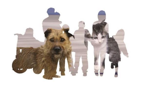 Hemeroteca: XII Salón para la adopción de animales de compañía de Madrid | Autor del artículo: Finanzas.com