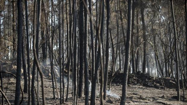 Hemeroteca: El riesgo por incencios forestales se prolongará más de lo habitual   Autor del artículo: Finanzas.com