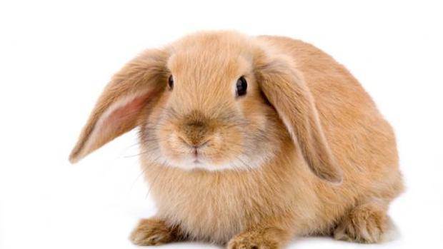 Mascotas: Agility con... ¡conejos!