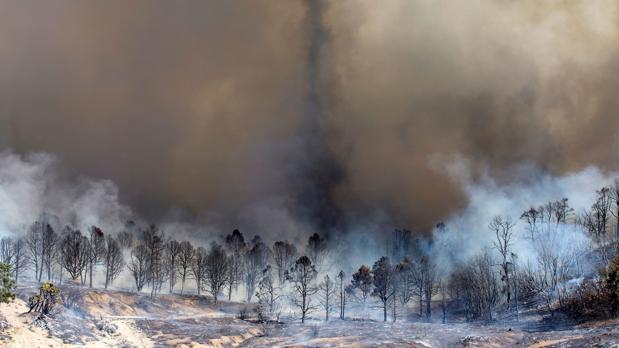 Una cadena de incendios salvajes arrasaron California el octubre pasado