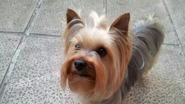 corto novia por correo estilo perrito en Bilbao