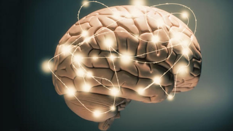 La empresa que pretende hacer copias digitales de cerebros humanos