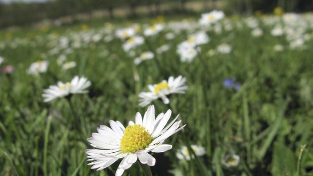El equinoccio de primavera supone que los días tengan una duración similar en todo el mundo
