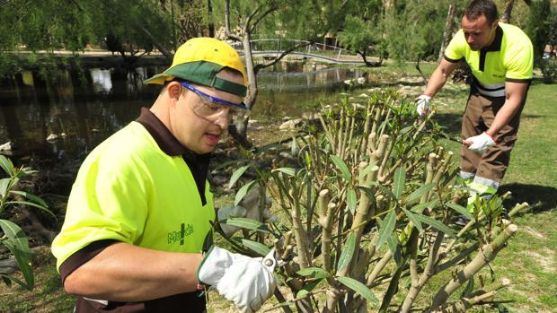 Un chico con síndrome de Down trabajando como jardinero