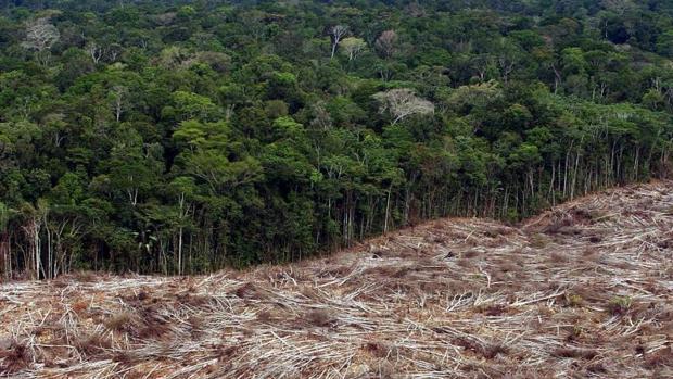 Deforestación de la Amazonia