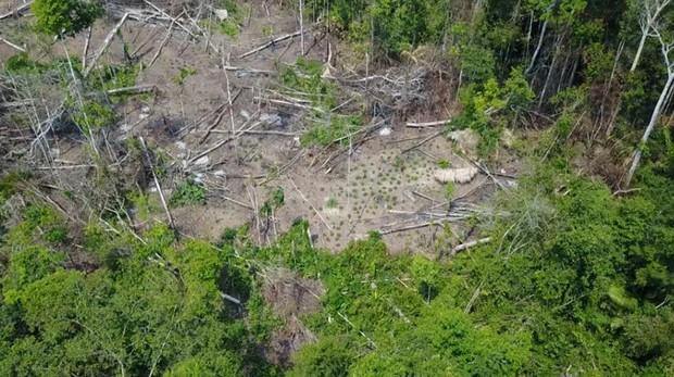 Hemeroteca: Un dron capta las imágenes de una tribu indígena aislada de Brasil | Autor del artículo: Finanzas.com