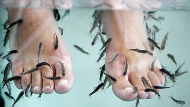 Imagen de unos pies sometiéndose a la ictioterapia