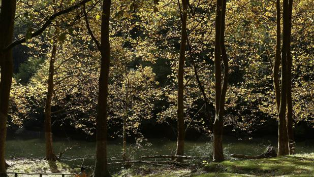 Naturen i vantan pa varen