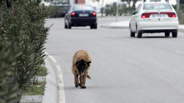 Miles de perros vagan cada año por las carreteras de nuestro país