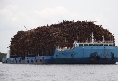 Un carguero transporta una montaña de troncos por el río Kumai, junto al parque nacional de Tanjung Puting. Además del aceite de palma, la industria de la madera y el papel agravan la deforestación en la isla de Borneo