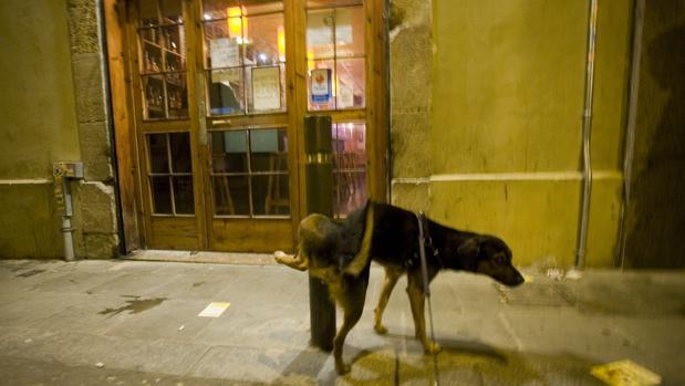 Multas de hasta 300 euros para los dueños de los perros que orinen en fachadas Perro-calle-k7iG--620x349@abc