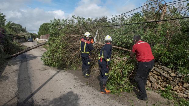 Bomberos retiran un árbol caído en la zona de la urbanización La Argentina, municipio de Alaior en Menorca, tras el fuerte viento