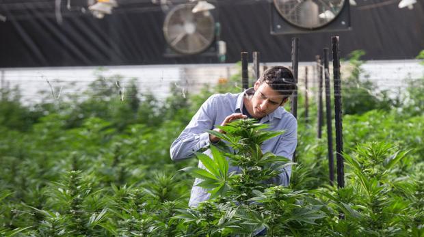 Breath of Life Pharma (BOL), empresa israelí dedicada al cultivo y manufactura del cannabis con fines medicinales