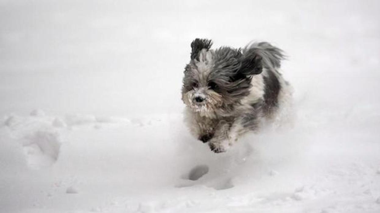 Cómo proteger a nuestros perros del frío polar