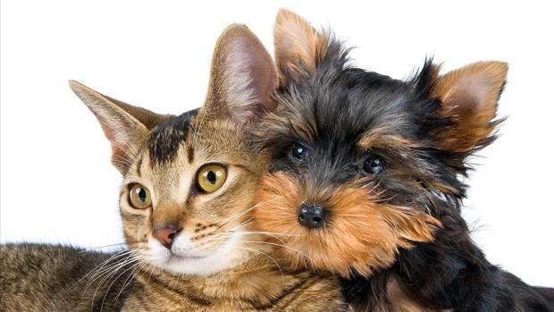 ojos-gatos-perros-kHgD--620x349@abc.jpg