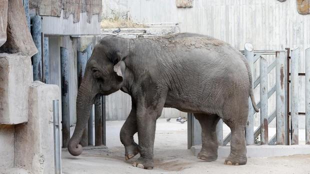 La ONU impulsa la prohibición de la venta de elefantes salvajes a reservas y zoológicos